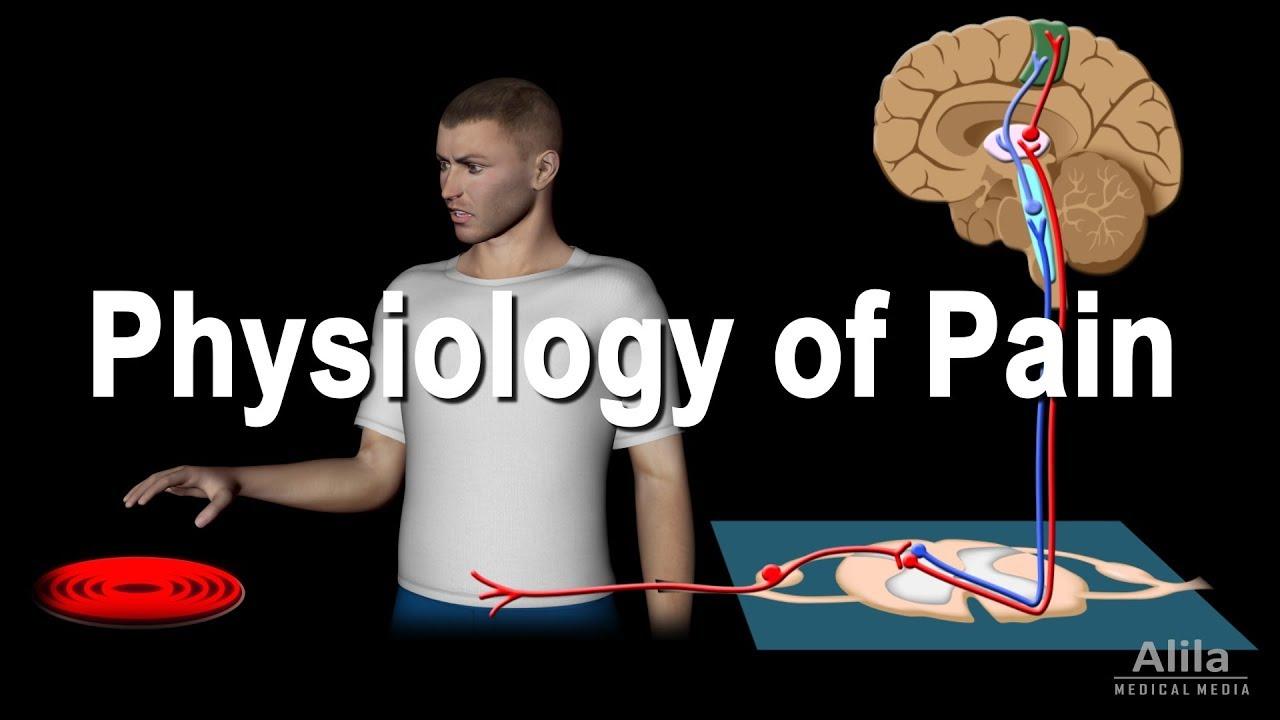 pain pathway pdf